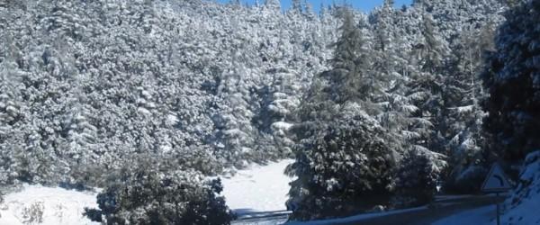 Seputih Salju